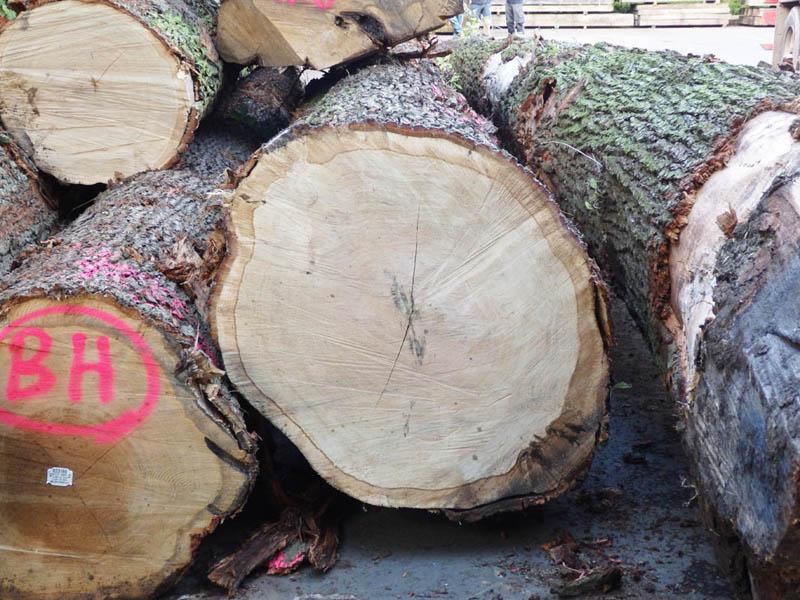 oak beams 1