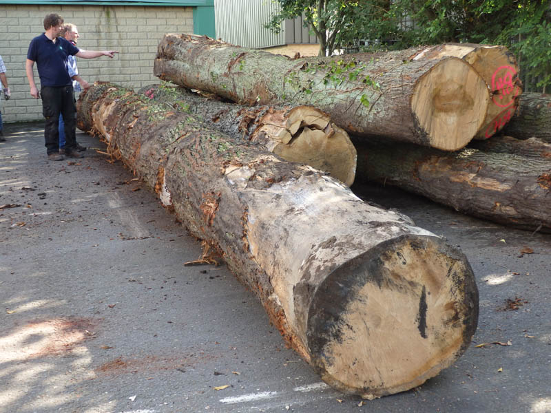 oak beams 14