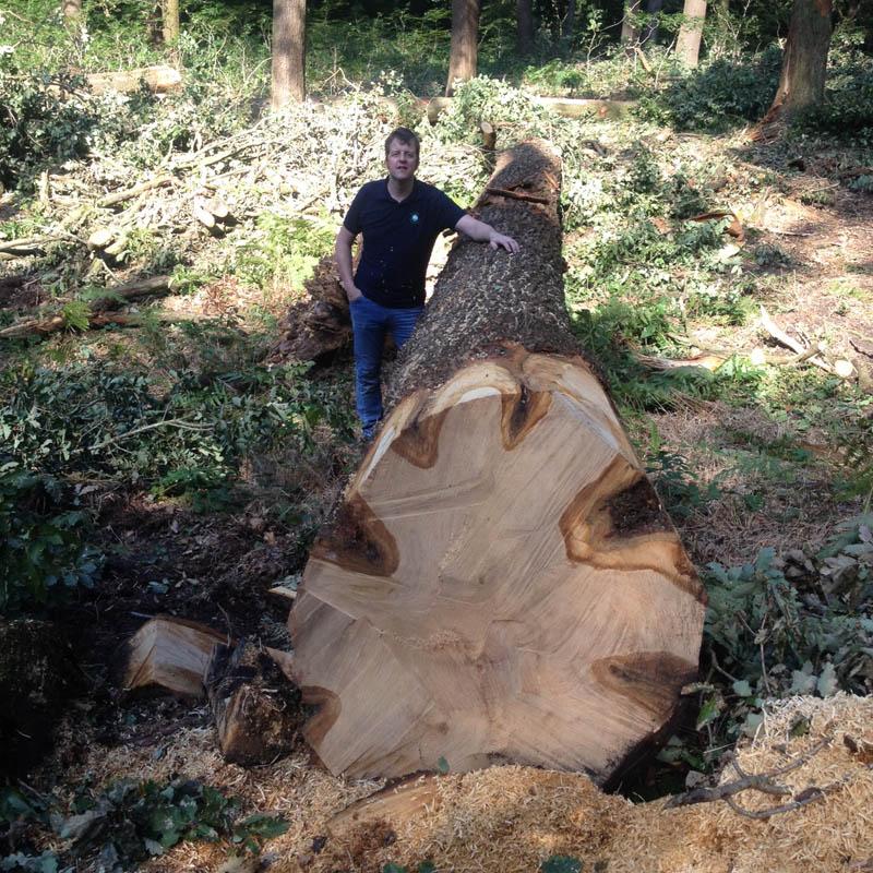 oak-beams-2