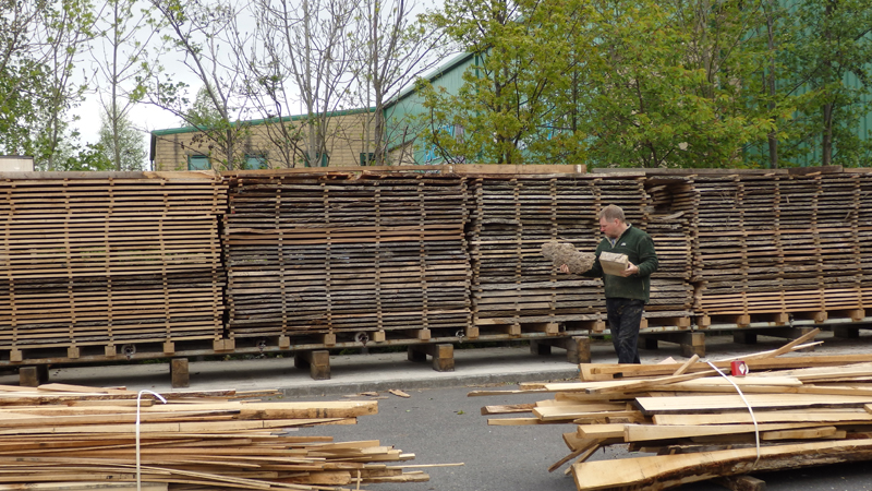 This batch of unloaded native timbers includes some lovely English pippy oak, pippy burr yew, sycamore and lime