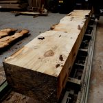 horse-chestnut-conker-log-being-cut-ripped-13