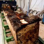 horse-chestnut-conker-log-being-cut-ripped-four