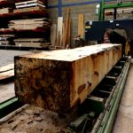 horse-chestnut-conker-log-being-cut-ripped-seven