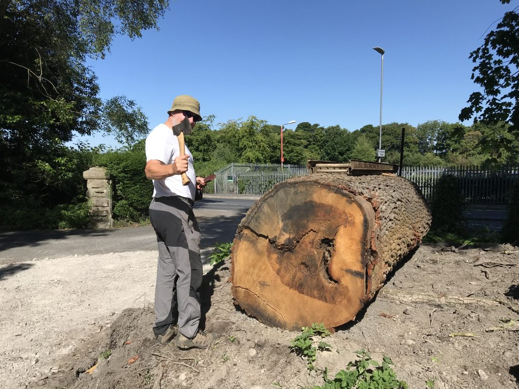 Tony ready to axe an oak log